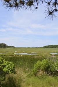Well Done, Wellfleet Bay Wildlife Sanctuary, Cape Cod
