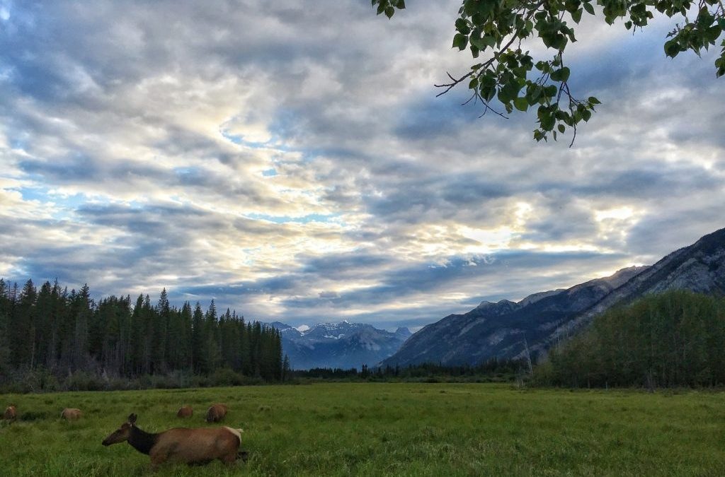 Campground Review #50 Canyon RV Resort on Sinclair Creek in Radium Springs, British Columbia, Canada
