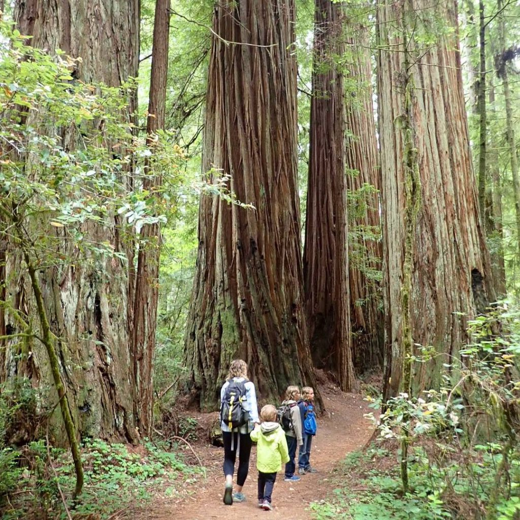 RVFTA #155 Greetings from the Redwoods National and State Parks in California!
