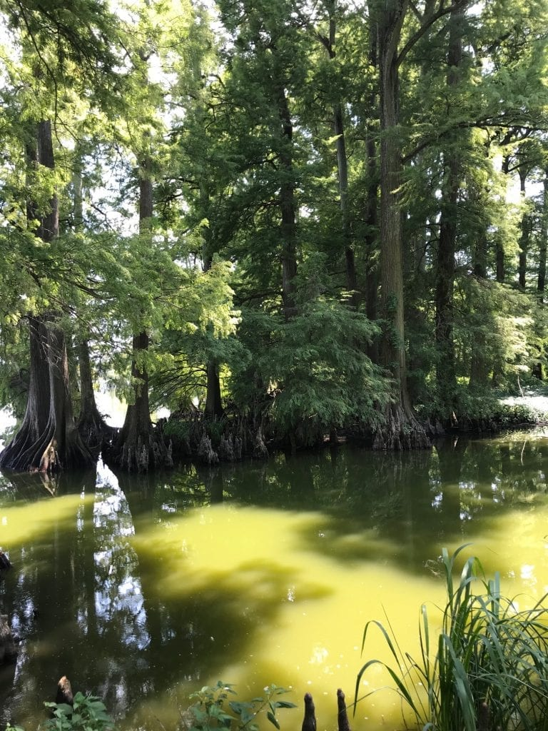 Campground Review: Reelfoot Lake State Park in Tennessee