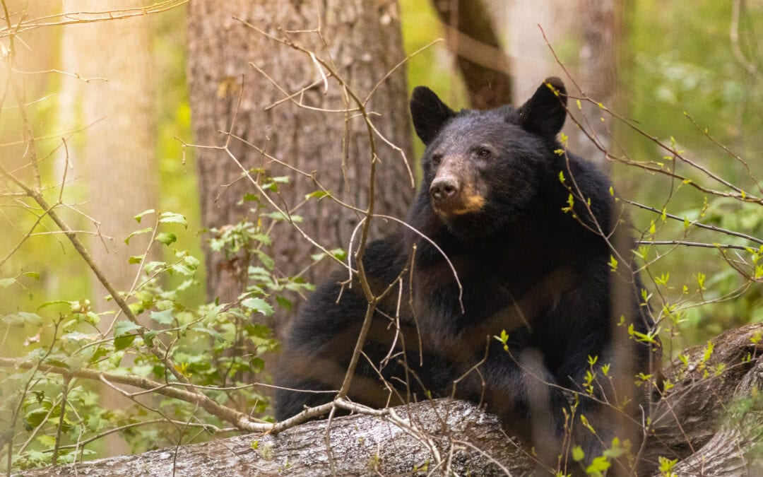 """10 """"Must See"""" Spots in Great Smoky Mountains National Park"""